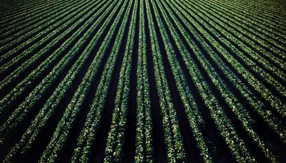 WilliamsCPA and Associates-Depreciating Farming Business Property