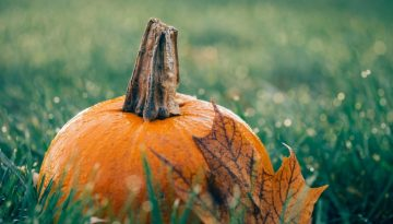 WilliamsCPA and Associates-October 1 Deadline to Set up SIMPLE IRA Plans