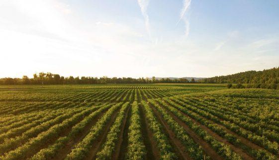 WilliamsCPAandAssociates-Filing a Farm Tax Return